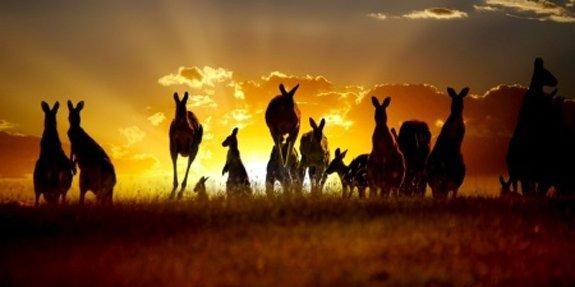 השמנת יתר באוסטרליה