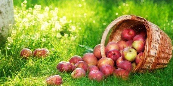תפוחים ותזונה